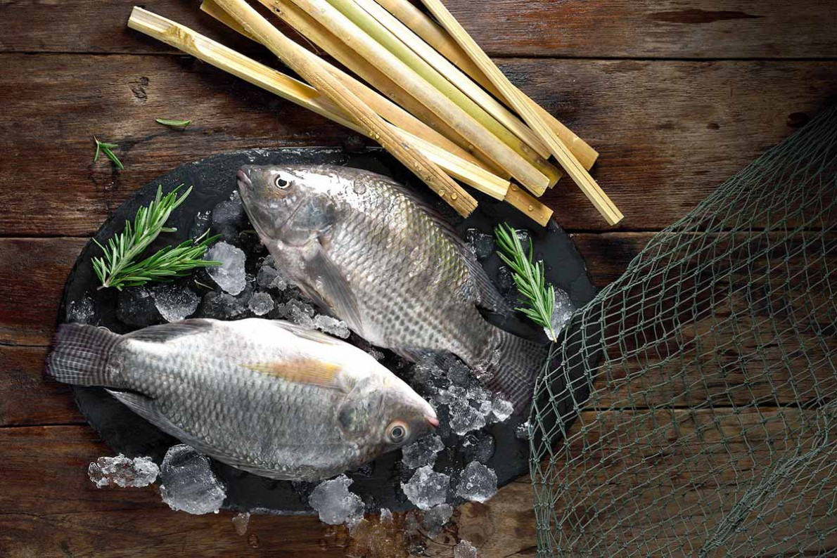 FROZEN FISHERY PRODUCTS